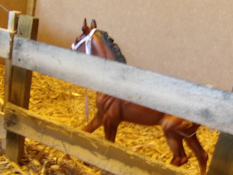 les chevaux de l'écurie Du vieux porche, bienvenue dans ce refuge miniature - Page 4 Imgp0215