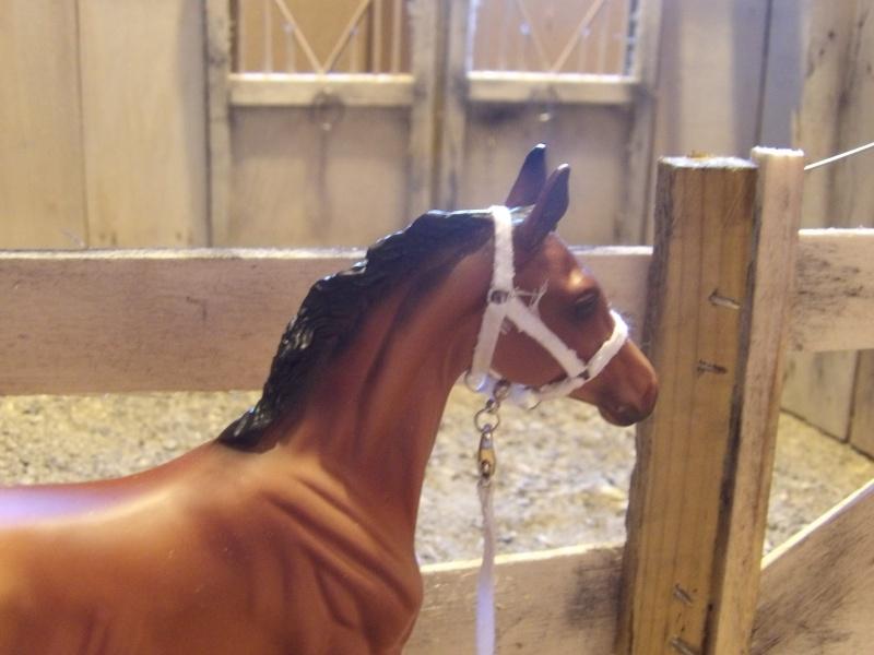 les chevaux de l'écurie Du vieux porche, bienvenue dans ce refuge miniature - Page 4 Imgp0216
