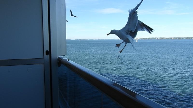 De retour croisière Baltique sur le Costa Pacifica Dscn0910