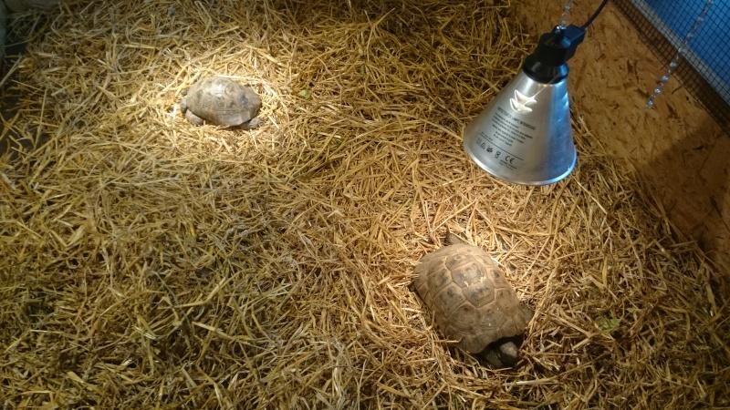 Arras 2015, plus de tortues que de visiteurs (ou presque)  Dsc_0922