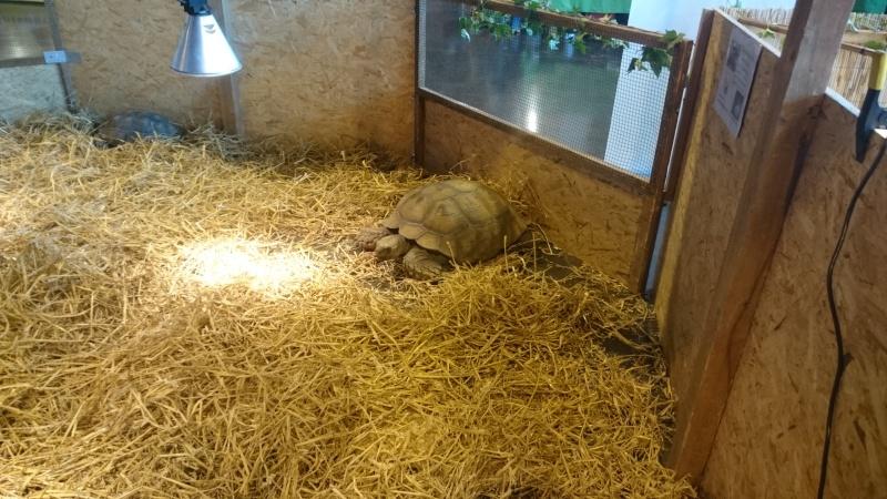 Arras 2015, plus de tortues que de visiteurs (ou presque)  Dsc_0923