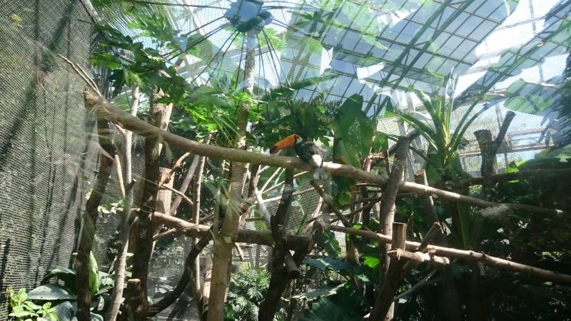 Sous les tropiques, à Vincennes...  Dsc_1018