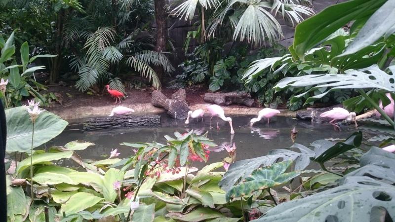 Sortie Dragons au Zoo de Vincennes  Dsc_1312