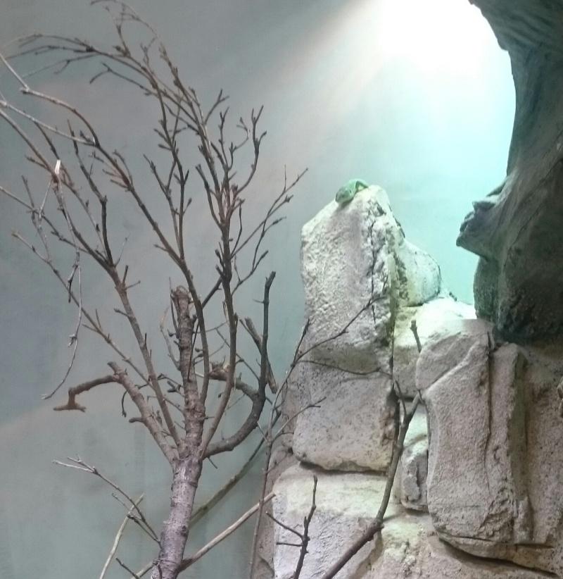 Sortie Dragons au Zoo de Vincennes  Img_2038
