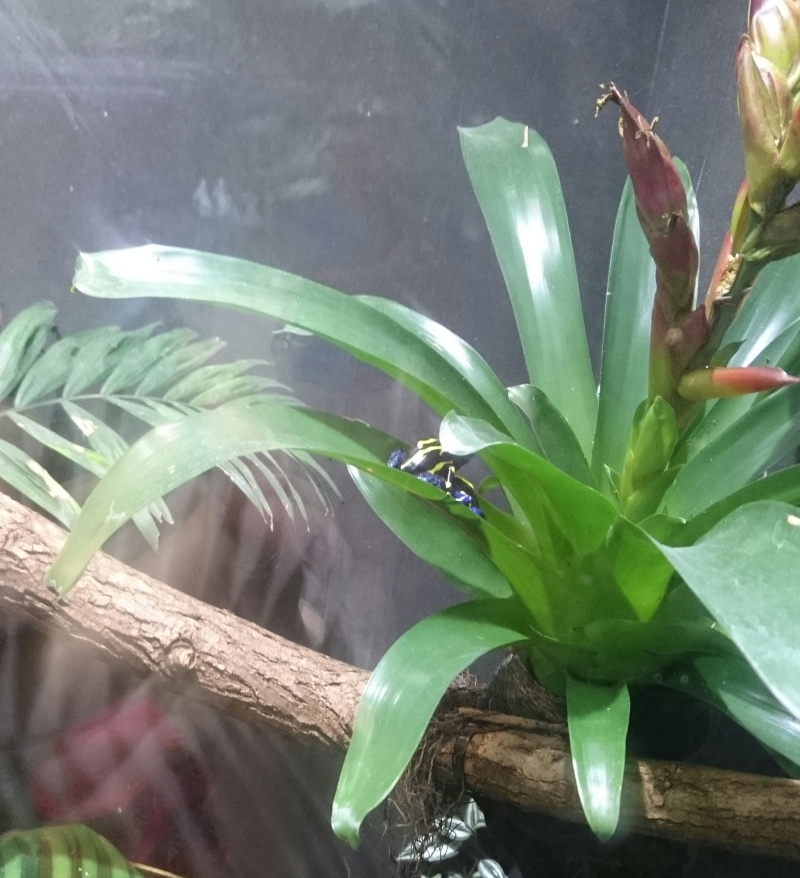 Sortie Dragons au Zoo de Vincennes  Img_2045