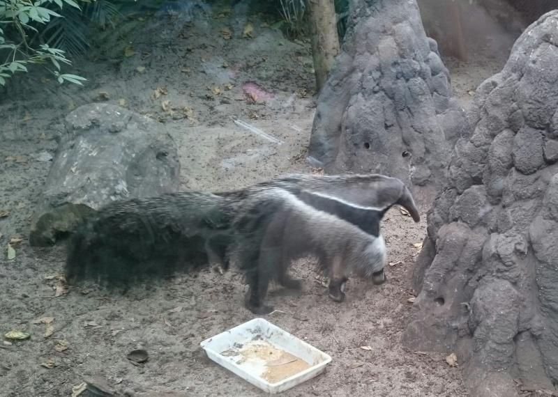 Sortie Dragons au Zoo de Vincennes  Img_2055