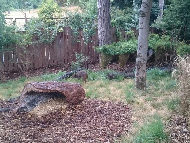 Sortie Dragons au Zoo de Vincennes  Img_2061