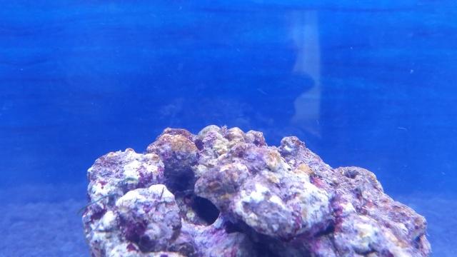 Mon premier aquarium - Page 3 20150610
