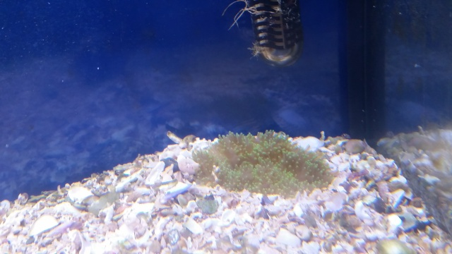 Mon premier aquarium - Page 4 20150810