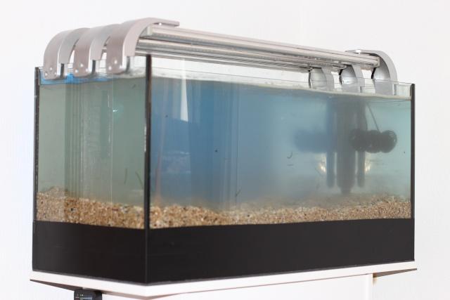 Mon premier aquarium - Page 3 Img_2812