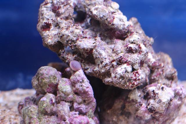 Mon premier aquarium - Page 3 Img_3010