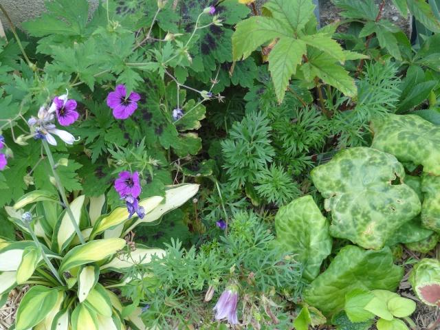 butinages du jour à l'ombre de nos plantes  Dsc03918