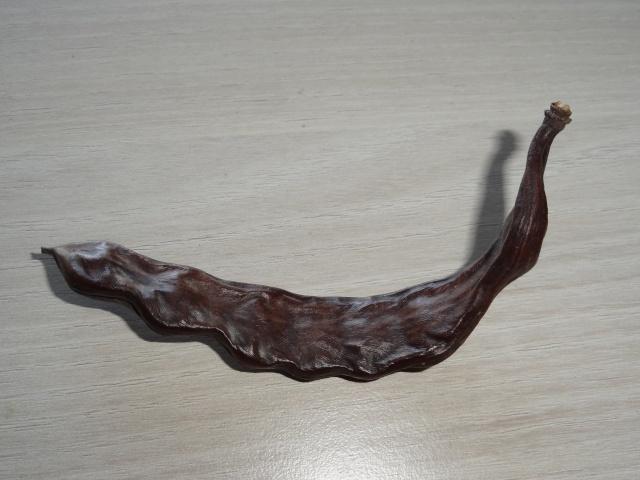 ceratonia siliqua - Ceratonia siliqua - caroube (graines) Dsc04414