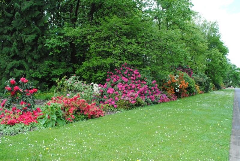 Cimetière Parc de Nantes- Orvault Dsc_0710