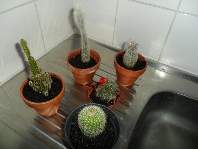 Mes bébés cactus - Page 2 Sam_2915