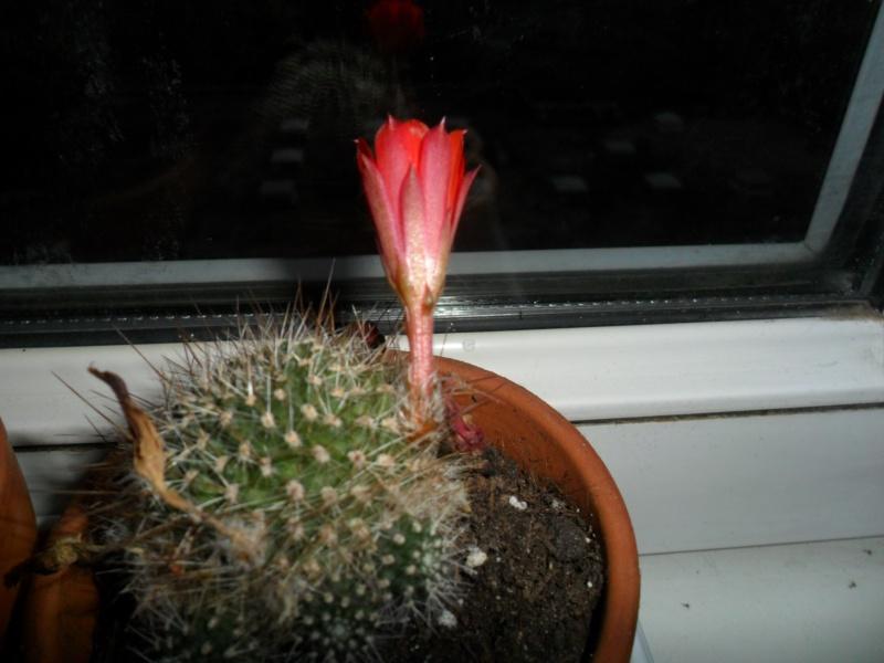 Mes bébés cactus - Page 2 Sam_3420