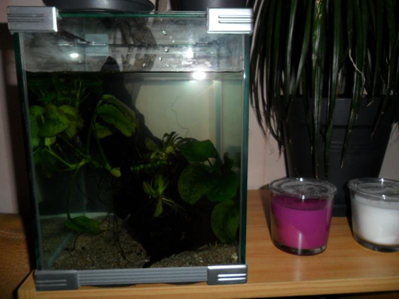 Mes grenouilles de petites tailles Sam_3512