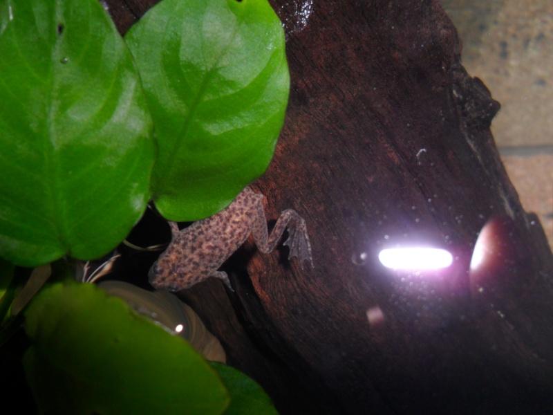Mes grenouilles de petites tailles Sam_3513