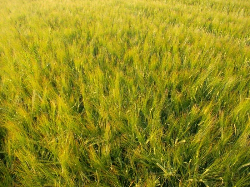 Un ptit tour de plaine chez Manos Sam_2912