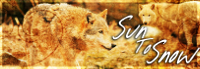 Warrior Cats Stories Suntos10