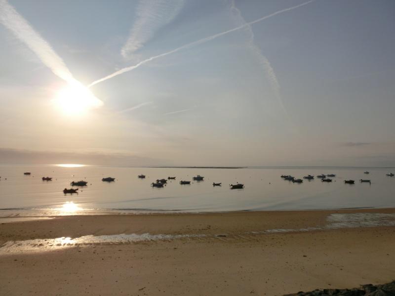 Une Sibley à Noirmoutier Cimg2114
