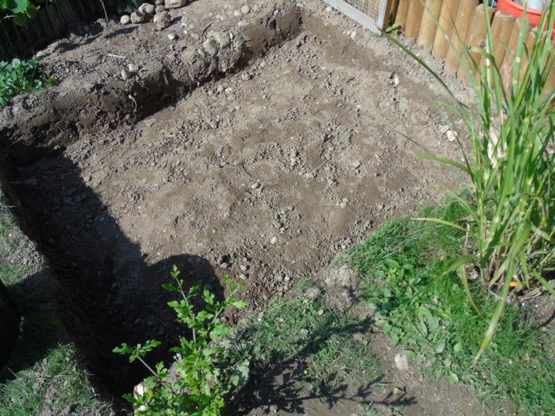 Le quartier d'été de mes deux stenotherus odoratus Dsc03418