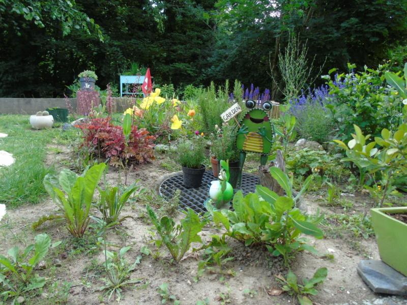Le jardin de mes boettgeri Dsc03428