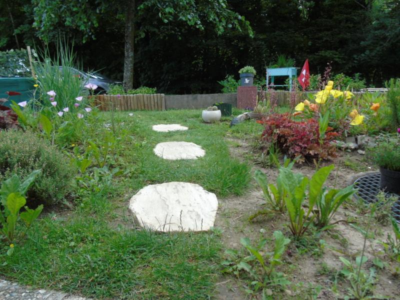 Le jardin de mes boettgeri Dsc03429