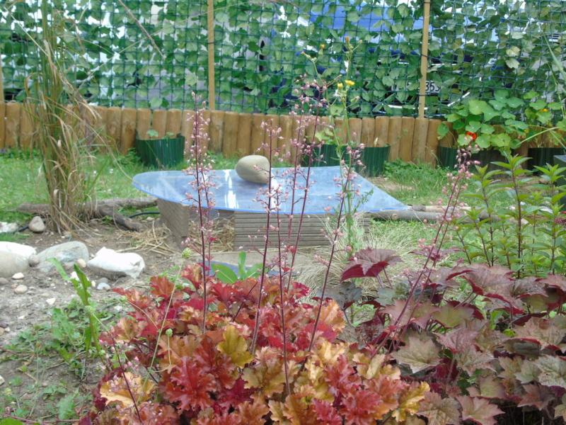 Le jardin de mes boettgeri Dsc03431