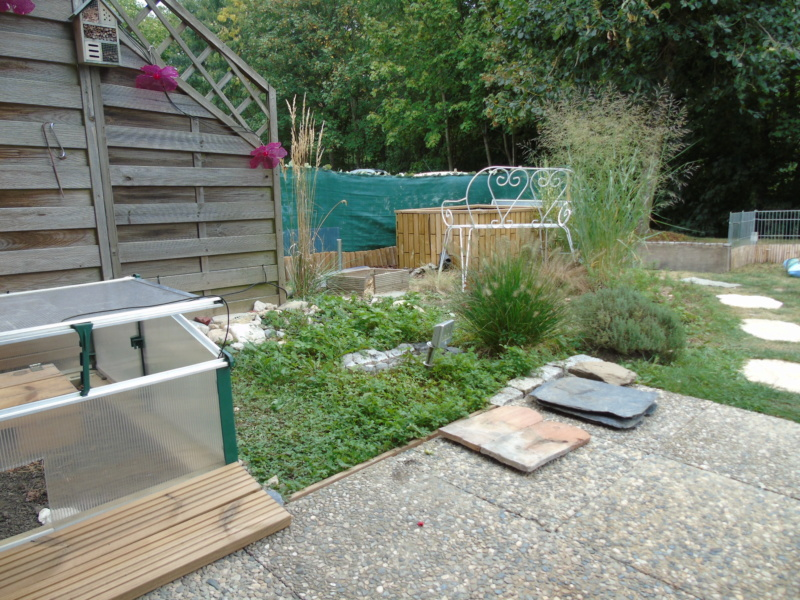 Le jardin de mes boettgeri Dsc03613