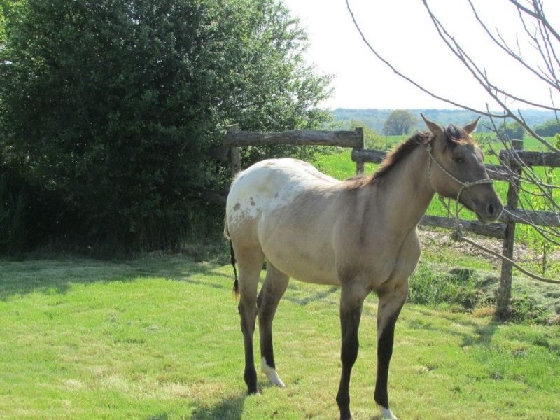 Le cheval toiletté 10271510