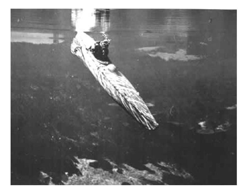 Le Canoë Submersible Image10