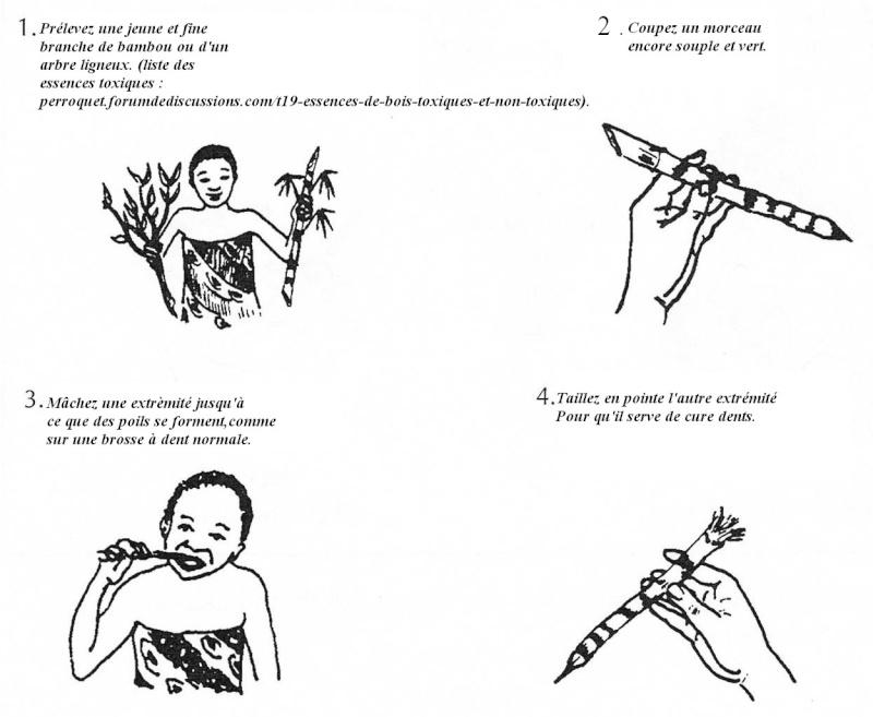 Santé Buco dentaire : quotidien et terrain. Commen10