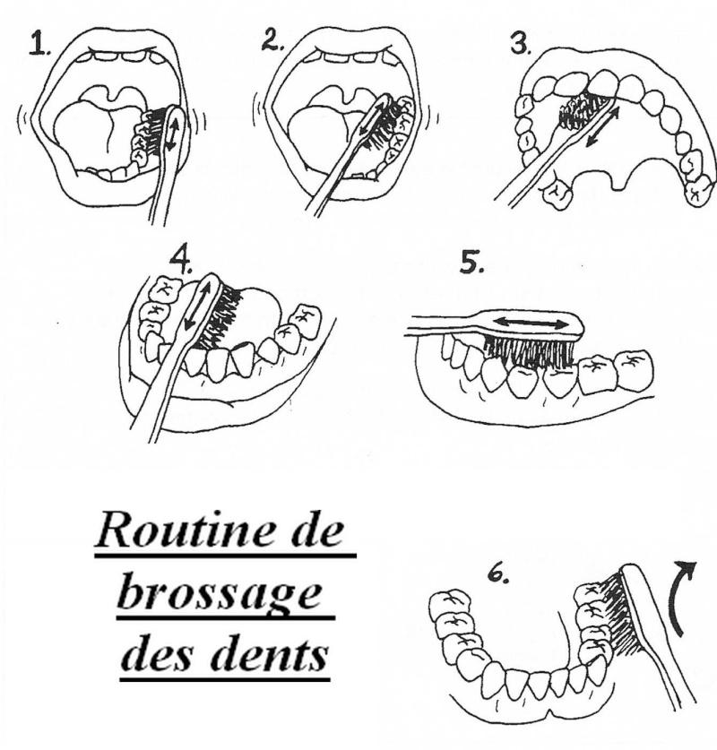 Santé Buco dentaire : quotidien et terrain. Routin10
