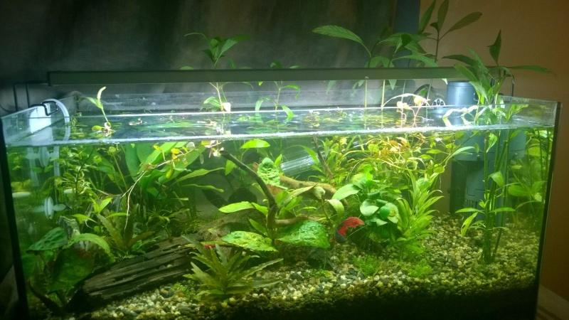 Prolifération escargots Aqua_210