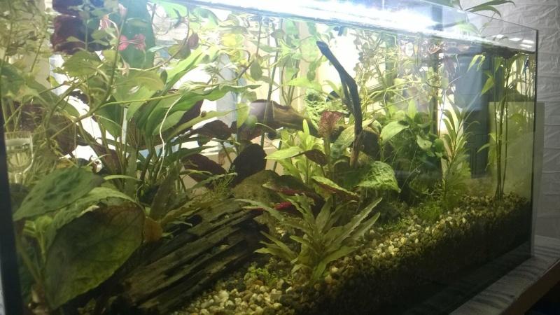 nouvel aquarium pour futur betta P110