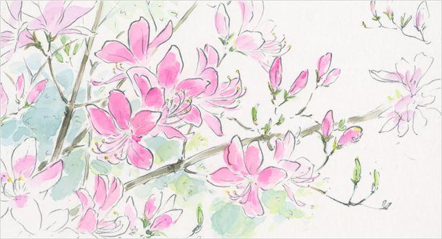 Kaguya-hime no Monogatari (Le conte de la princesse Kaguya) 46915511