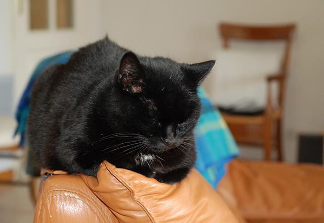 Le chat Dsc_6110