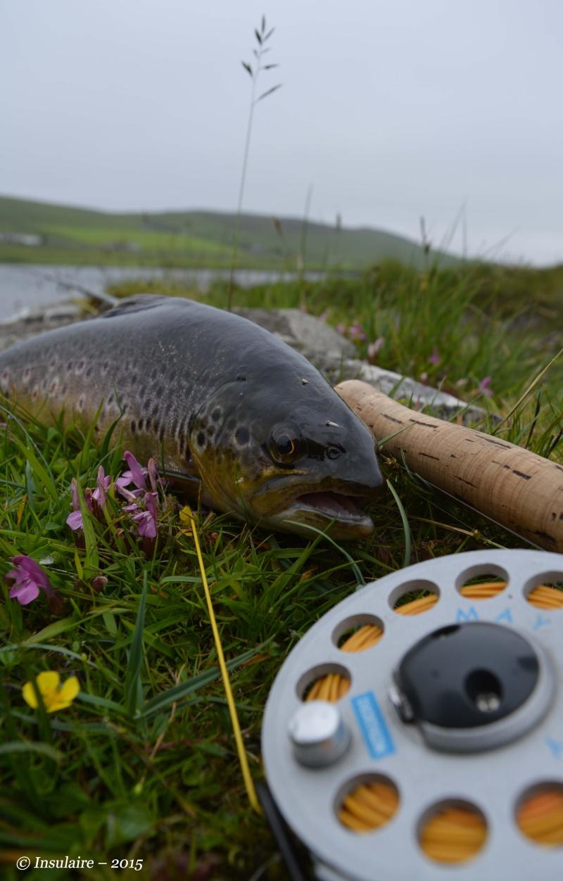 Truites des Iles Shetland Trout110
