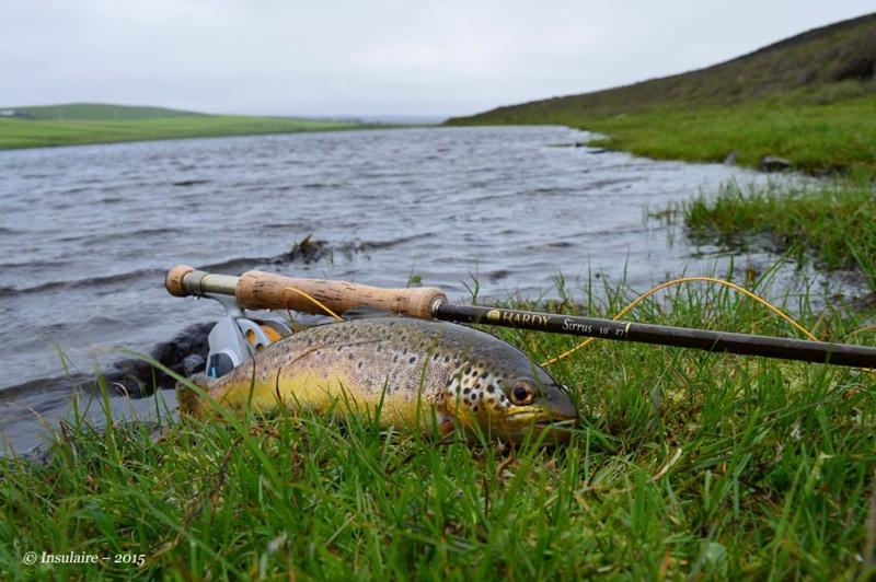 Truites des Iles Shetland Trout310