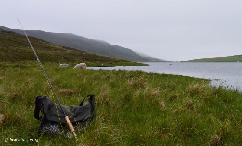 Truites des Iles Shetland Trout410