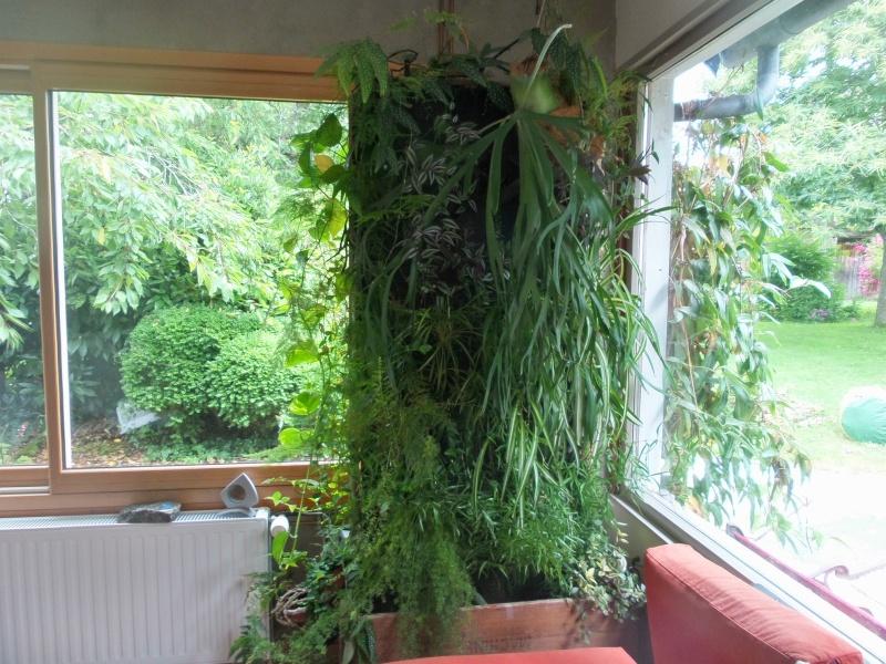 mur végétal: évolution dans le temps et pH 20150710
