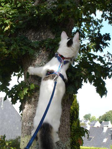 LOUKOUM, chaton Européen  blanc tacheté, à poils longs, né le 20/03/2015 Dsc01015
