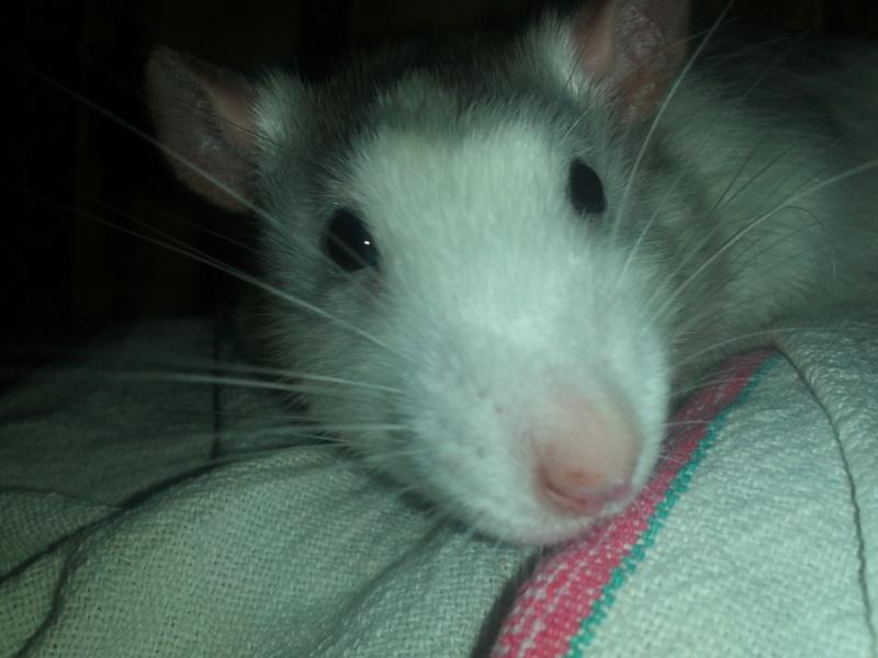 Sorte de rat Img10510