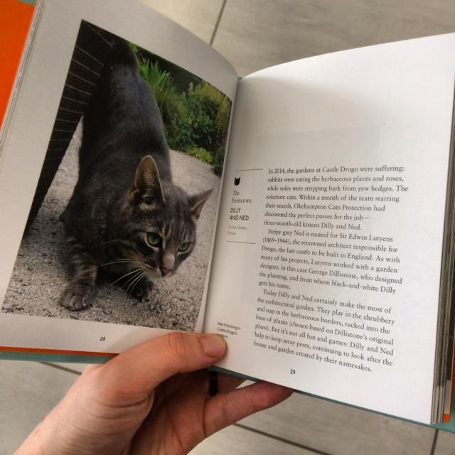 Cats d'Amy Feldman Img_3511
