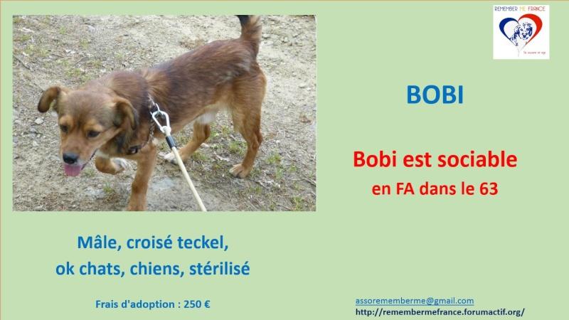 BOBI - Mâle petite taille croisé teckel (PASCANI) - adopté par Béatrice (dpt 63) - DECEDE  510