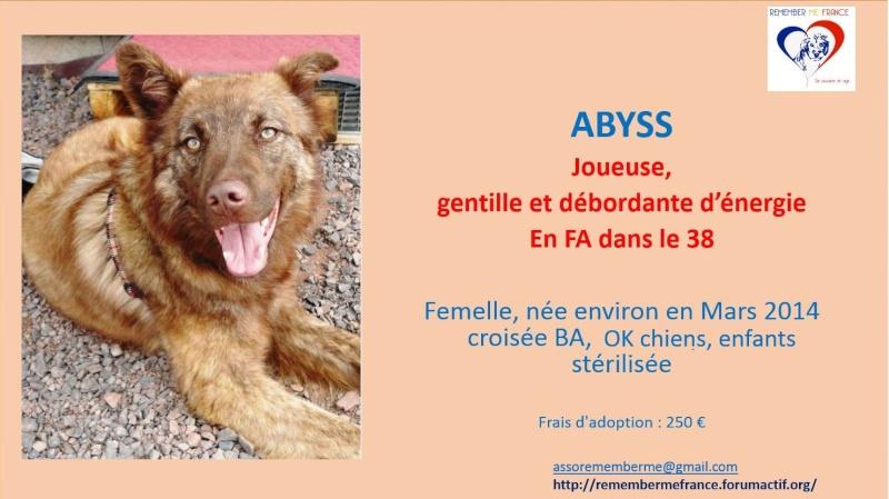 ABYSS -Très Jeune Femelle croisée, taille moyenne - adoptée par Pierre-Emmanuel (dpt95) Abyss10