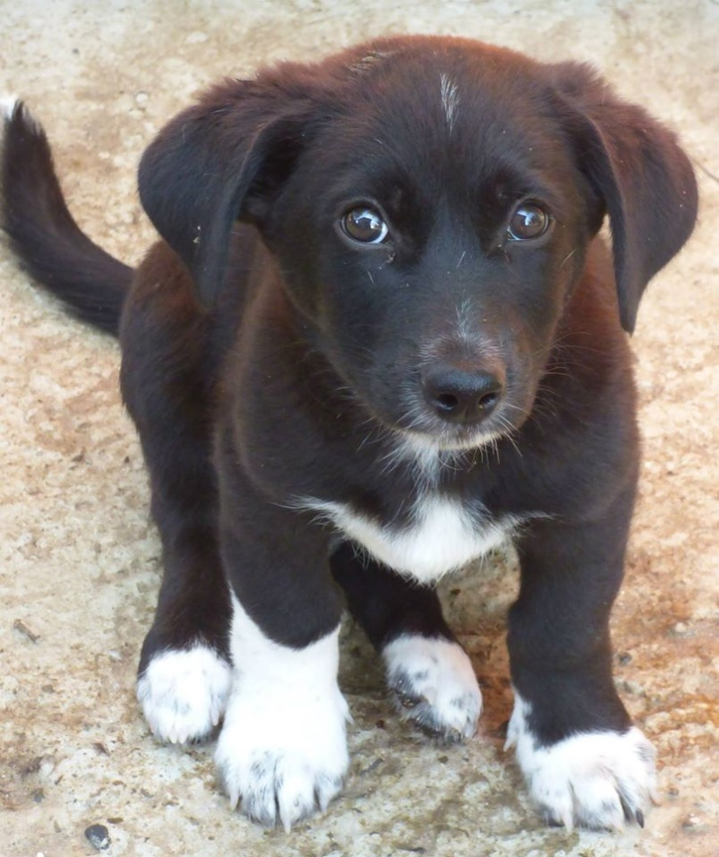 BLACK, chiot mâle, né en mai 2015 (Pascani) - en pension chez Lucian Black10