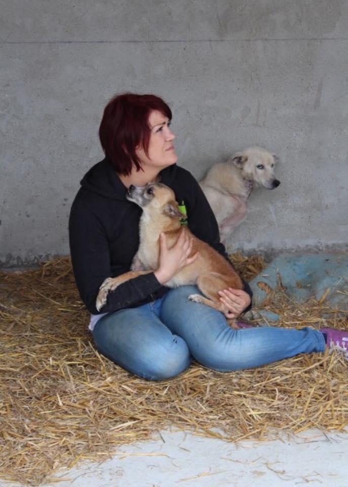 alina - DELLA, femelle croisée chihuahua, née environ 2007, petite taille (refuge Anda et Alina) - adoptée par Danièle (dpt 82) Della110