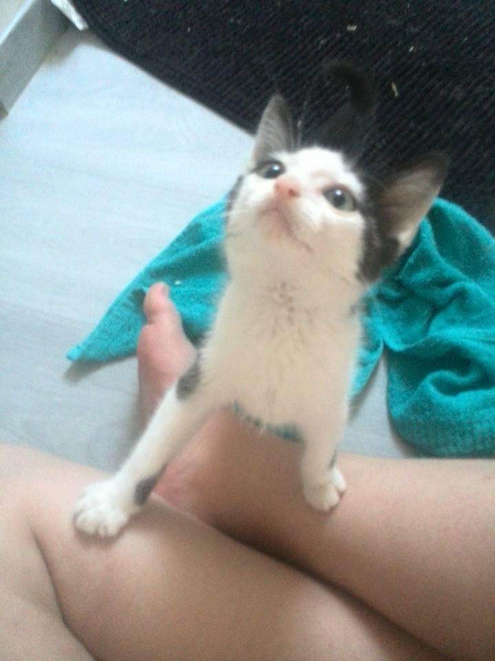 LOOKY, chaton mâle né en mai 2015 - adopté par Marion (dpt 67) Looky10